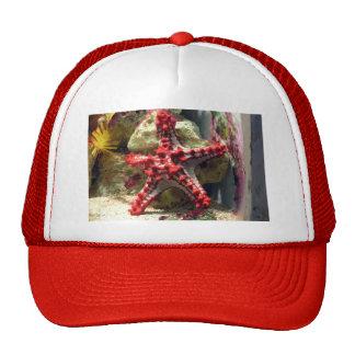 Estrellas de mar nudosas rojas - tiro increíble gorros bordados