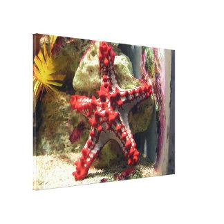 Estrellas de mar nudosas rojas - tiro increíble lienzo envuelto para galerías