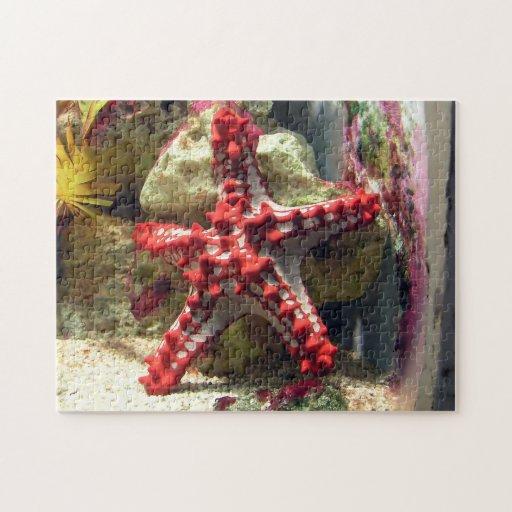 Estrellas de mar nudosas rojas - tiro increíble puzzles con fotos