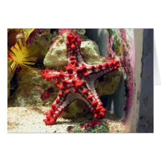 Estrellas de mar nudosas rojas - tiro increíble tarjeta de felicitación