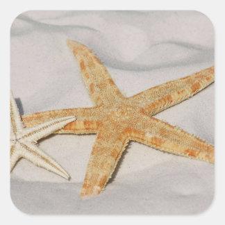 Estrellas de mar pegatina cuadradas personalizadas