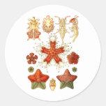 Estrellas de mar pegatina redonda