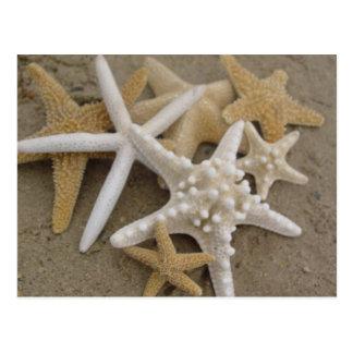 Estrellas de mar postal
