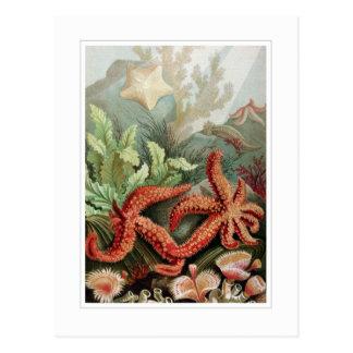 Estrellas de mar postales
