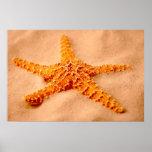 Estrellas de mar posters