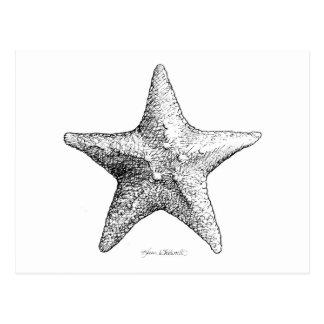Estrellas de mar que dibujan arte de la estrella postal