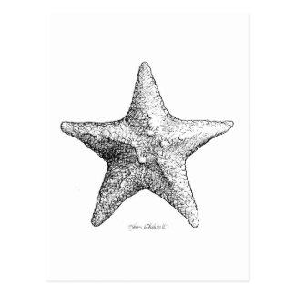 Estrellas de mar que dibujan arte de la estrella tarjetas postales