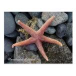 Estrellas de mar rojas, isla de Unalaska Tarjetas Postales