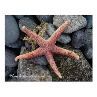 Estrellas de mar rojas, isla de Unalaska Tarjeta Postal