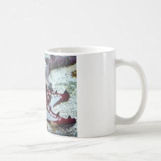 estrellas de mar, rojo y blanco tazas de café