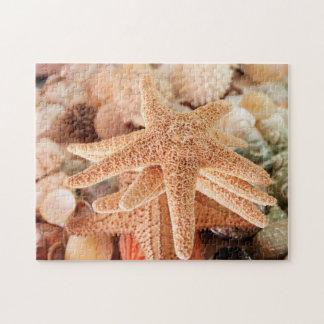 Estrellas de mar secadas vendidas como recuerdos 2 puzzle