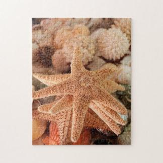Estrellas de mar secadas vendidas como recuerdos rompecabeza