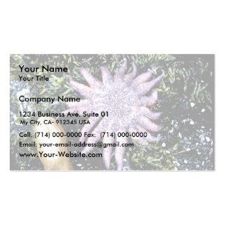 Estrellas de mar tarjeta personal