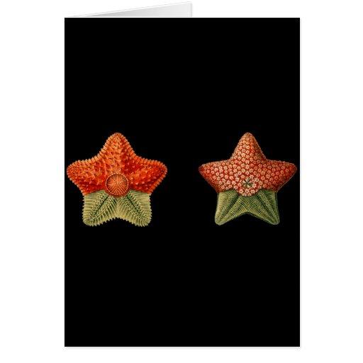 Estrellas de mar tarjeta de felicitación