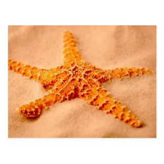 Estrellas de mar tarjetas postales