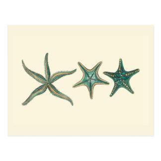 Estrellas de mar triples del Aquamarine Postal