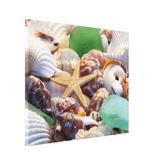 Estrellas de mar y abrigo de la lona de los Seashe Lona Envuelta Para Galerías