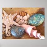 Estrellas de mar y cáscaras en cesta de madera impresiones