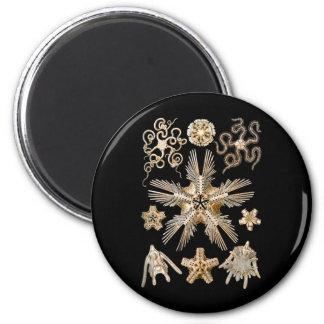 Estrellas frágiles imán redondo 5 cm