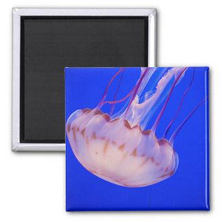 Estrellazo de medusas imán para frigorífico