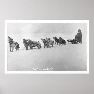 Estribillo Alaska 1920 del Malamute Impresiones