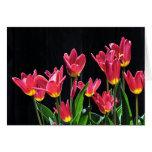 Estribillo de tulipanes tarjetón