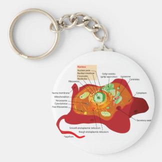 Estructura de célula animal llavero redondo tipo pin