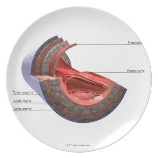 Estructura de la pared de la vena platos de comidas