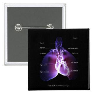 Estructura del corazón y de los pulmones pin cuadrado
