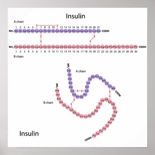 Estructura del poster humano de la insulina