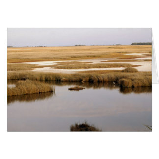 Estuary Card
