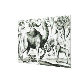 Estudio de animales y de flores, grabado impresión en lienzo