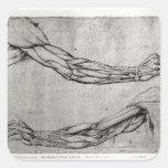 Estudio de brazos pegatinas cuadradas
