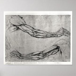 Estudio de brazos póster