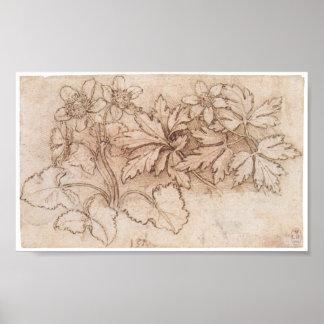 Estudio de dos plantas, Leonardo da Vinci Póster