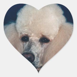 Estudio de la cabeza del caniche pegatina en forma de corazón
