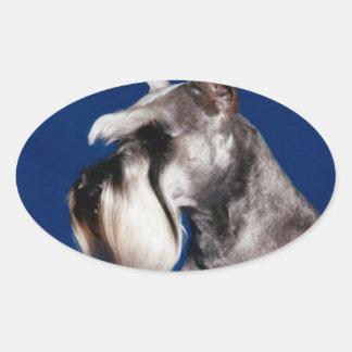 Estudio de la cabeza del Schnauzer miniatura Pegatina Óval