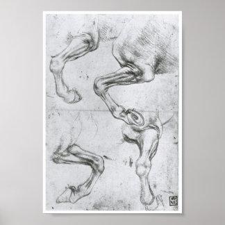 Estudio de las piernas de un caballo, Leonardo da  Póster