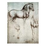 Estudio de los caballos - Leonardo da Vinci Postal