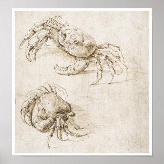 Estudio del cangrejo, Leonardo da Vinci Póster
