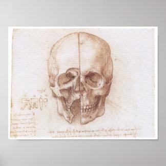 Estudio del cráneo humano, Leonardo da Vinci Póster