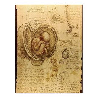 Estudio del feto del bebé de Leonardo da Vinci Postales