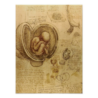 Estudio del feto del bebé de Leonardo da Vinci Póster