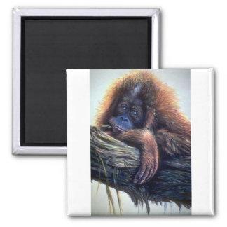 Estudio del orangután imán para frigorifico