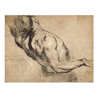 Estudio del torso del hombre de Paul Rubens Tarjetas Postales