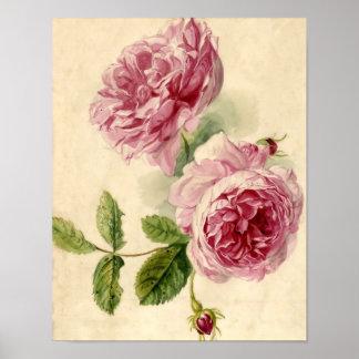 Estudio rosado del siglo XVIII del rosa Póster