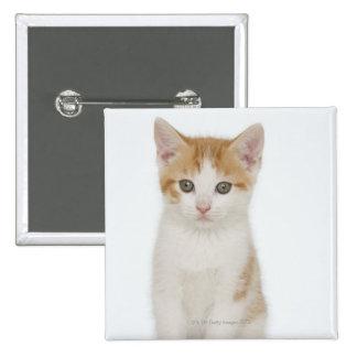 Estudio tirado de gatito pin cuadrado