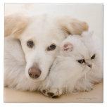Estudio tirado de gato y de perro azulejo ceramica