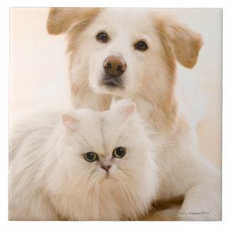 Estudio tirado de gato y de perro azulejo cuadrado grande