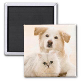 Estudio tirado de gato y de perro iman de nevera